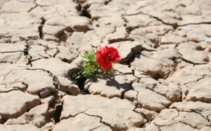 red_flower_growing_out_of_crack_in_rocks