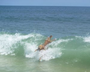 dog in waves