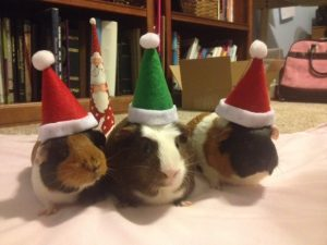 pigs-in-hats